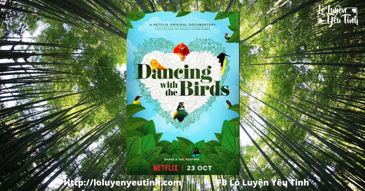 [Review Phim Tài Liệu] Vũ Điệu Của Loài Chim – Dancing With The Birds
