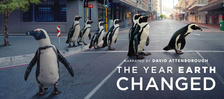 Chim cánh cụt Nam phi